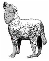 image of a wolf in sheep's clothing